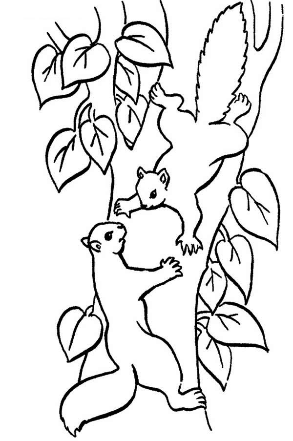 Drawn squirrel angry Animals Climbing love Squirrel i