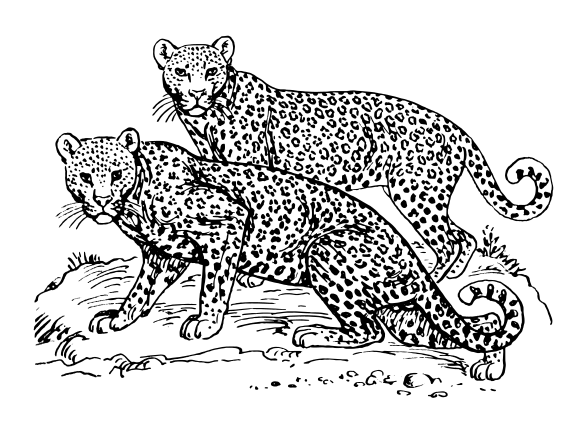 Clouded Leopard  clipart Clipart Domain Leopard page of
