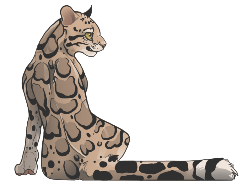 Clouded Leopard  clipart By on leopard by The