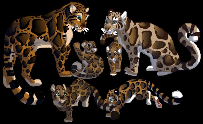 Clouded Leopard  clipart 2 DeviantArt Explore 107 by