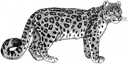 Clouded Leopard  clipart Leopard Leopard Snow Art Clip