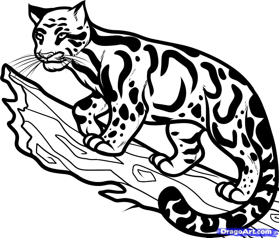 Drawn snow leopard tree drawing Coloring Download Leopard coloring #17