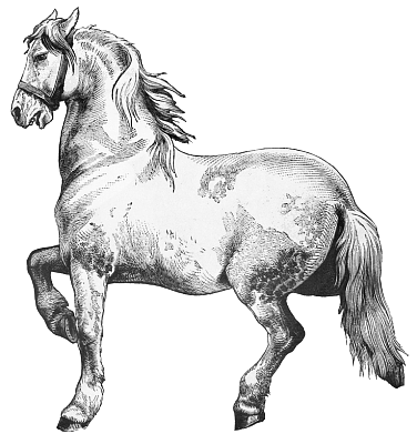 Clydesdale clipart #12