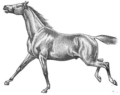 Horse Racing clipart gallop #6
