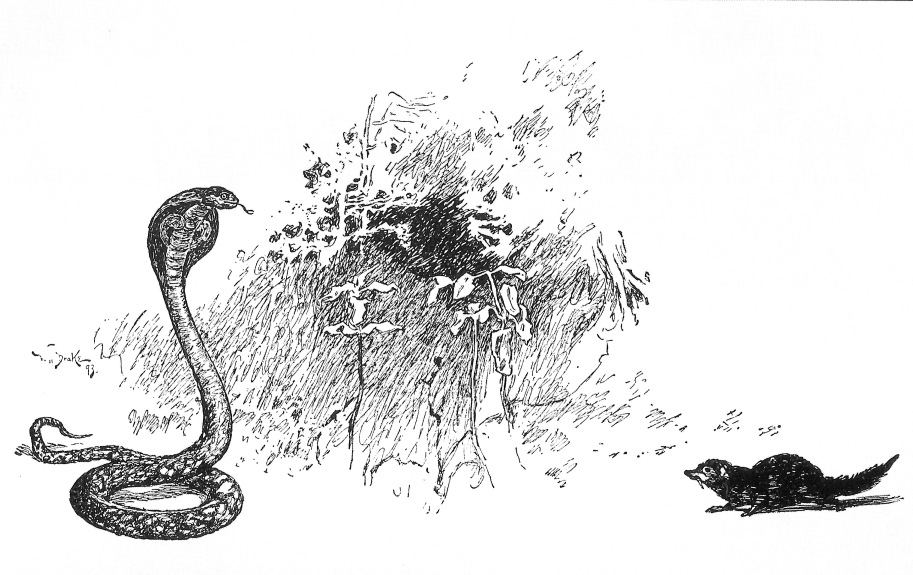 Mongoose clipart black and white Cobra Drawing Fighting Cobra fighting