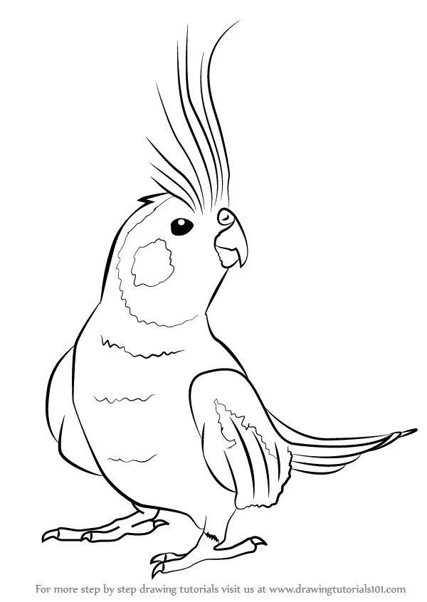 Brds clipart cockatiel Drawing Draw to birds How