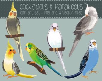 Brds clipart cockatiel JPG Clip Parakeets Birds Etsy