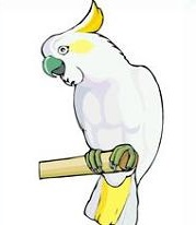 Cockatoo clipart Clipart Cockatoo Free Cockatoo