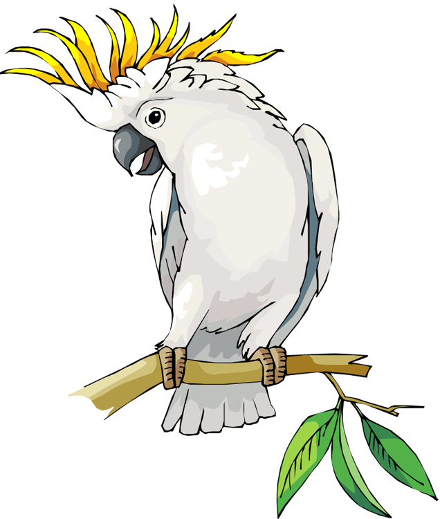Cockatoo clipart Parrot Parrot Clipart Clipart Free