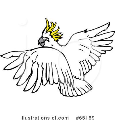 Cockatoo clipart Download Cockatoo clipart clipart #17