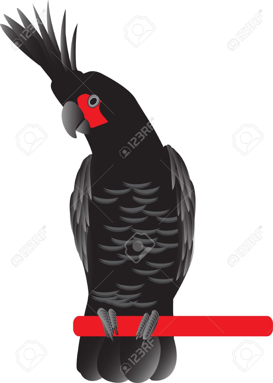 Cockatoo clipart #1 Palm Palm Cockatoo clipart