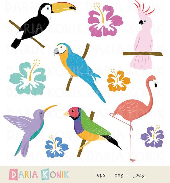 Toucan clipart tropical bird #1