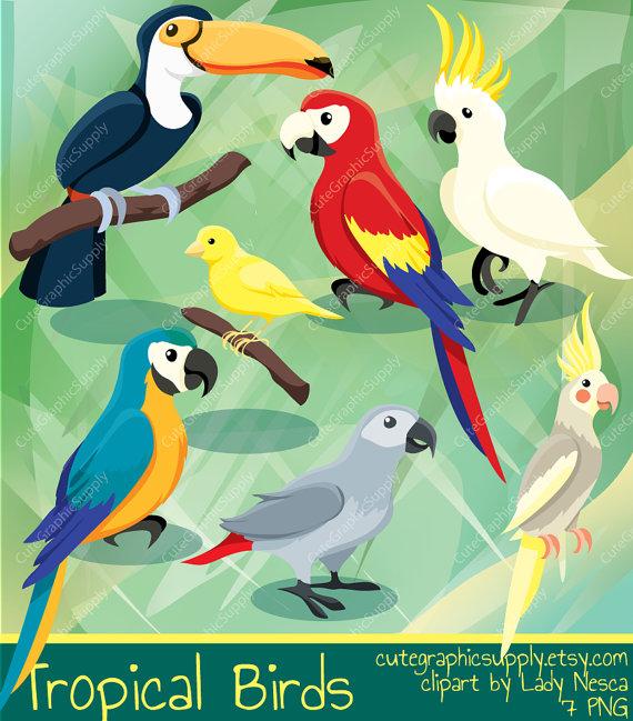 Brds clipart cockatiel Clipart birds Tropical parrot clipart