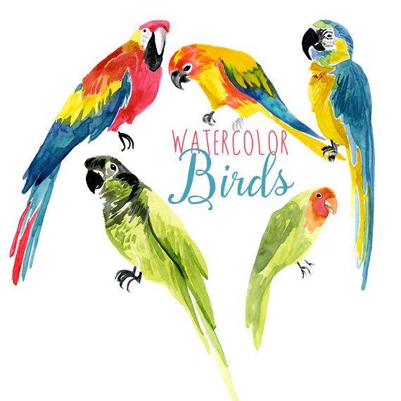 Brds clipart parrot Tropical Clip Birds ideas Exotic