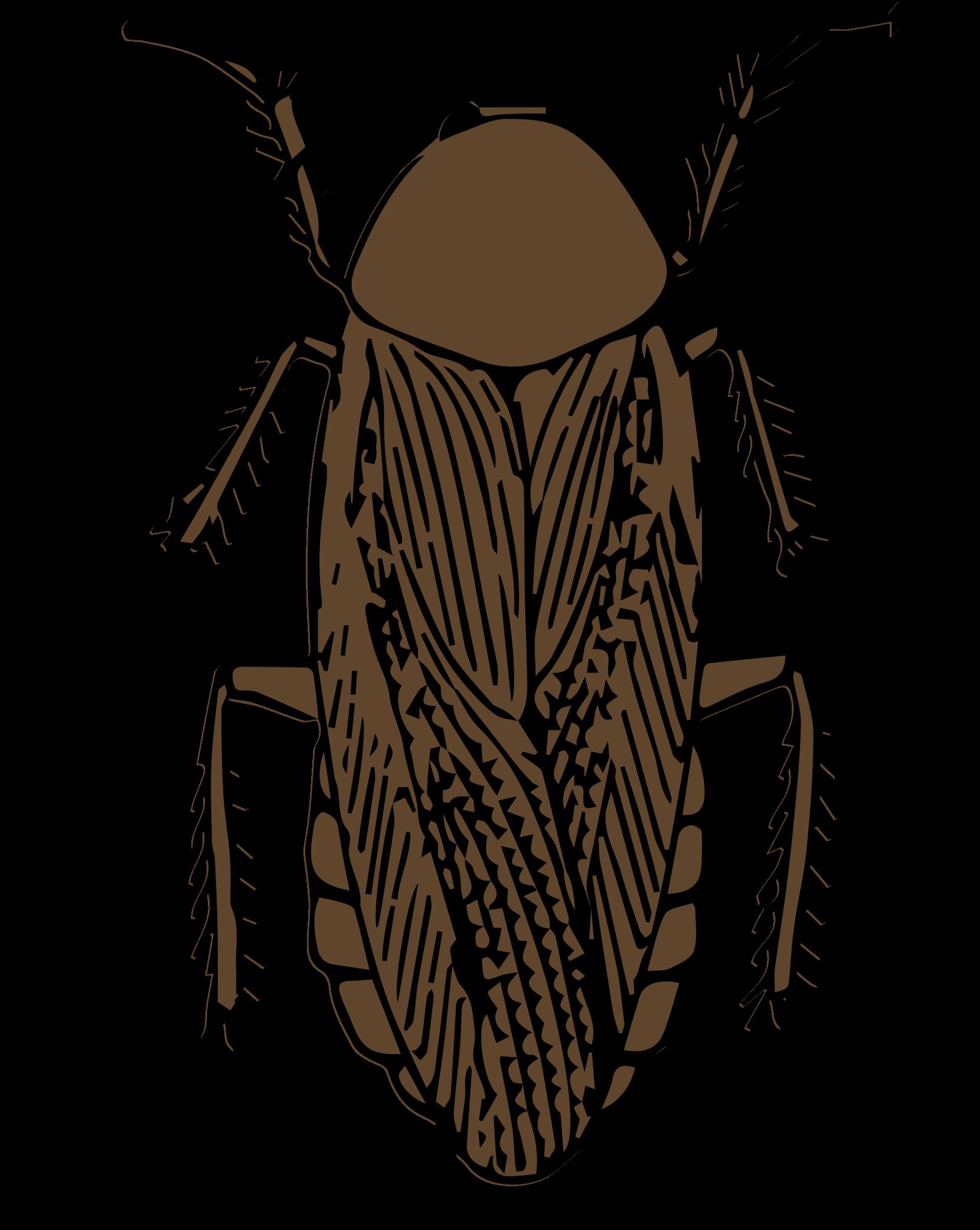 Cockroach clipart WikiClipArt cockroach Clipart color Clipart