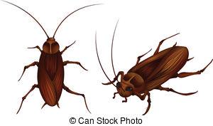 Cockroach clipart Clipart Clipart Clipart Cockroach 5