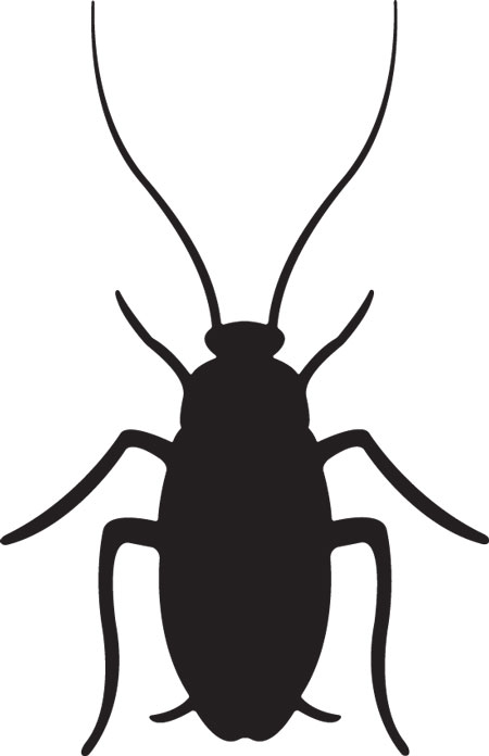 Cockroach clipart Savoronmorehead Image Clip 81 Top