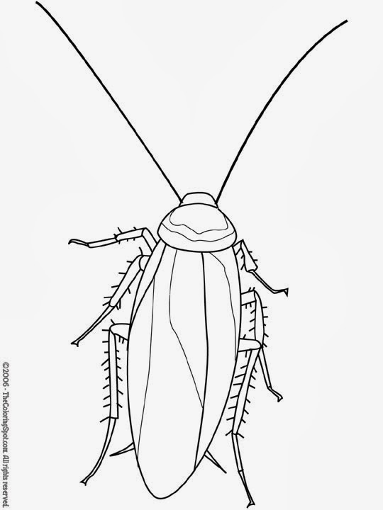 Black clipart cockroach 81 Free Cockroach Clipart Clipart