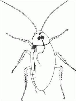 Black clipart cockroach White Clipart photo#5 Cockroach clipart