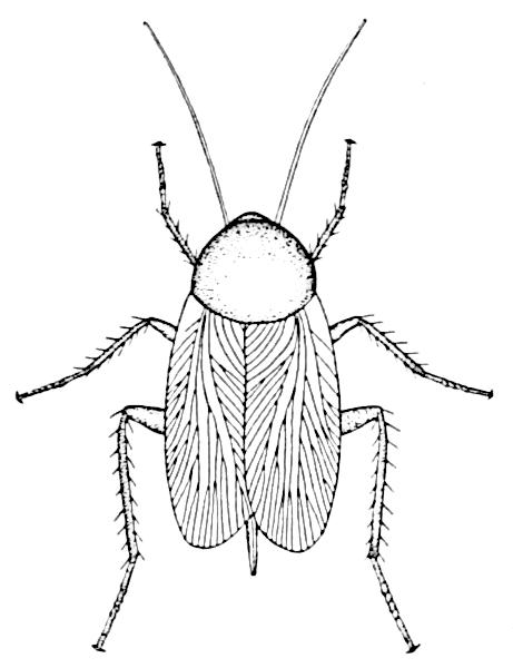 Black clipart cockroach White Clipart photo#7 Cockroach clipart