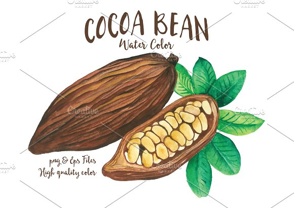 Beans clipart cocoa bean Illustrations  Bean Fruit Cocoa