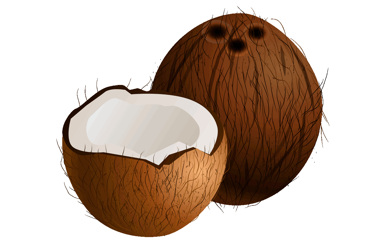 Coconut clipart Shocking With download coconut A