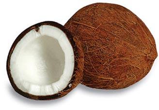 Coconut clipart Clipart clip  Coconut Coconut