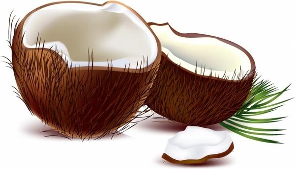 Coconut clipart Vector) download Coconuts vector Free