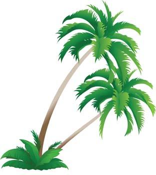Palm Tree clipart palma Art Tree on Clip Art