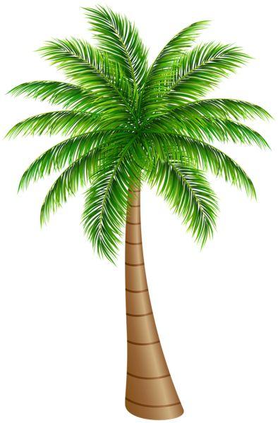 Palm Tree clipart caribbean food Best on  Palm art