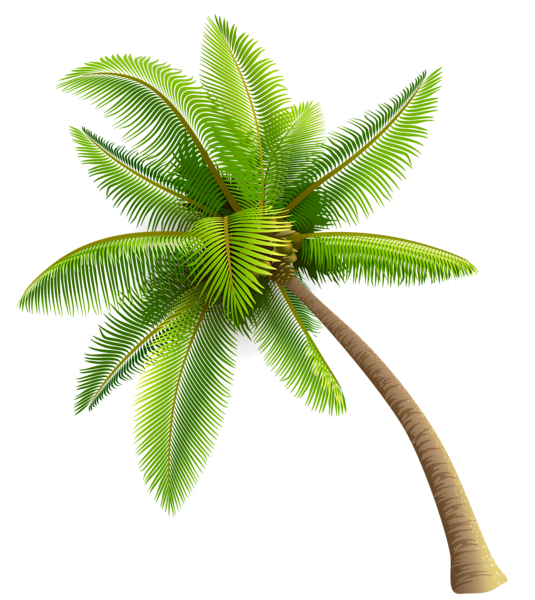 Palm Tree clipart real Transparent Free Image Download Coconut