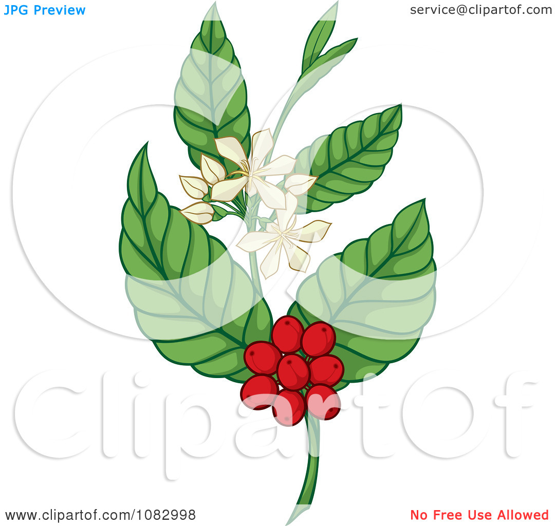 Coffee Plant clipart And Coffee Plant Clipart Coffee