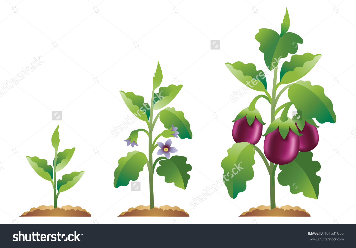 Eggplant clipart vector Plant To Grown From