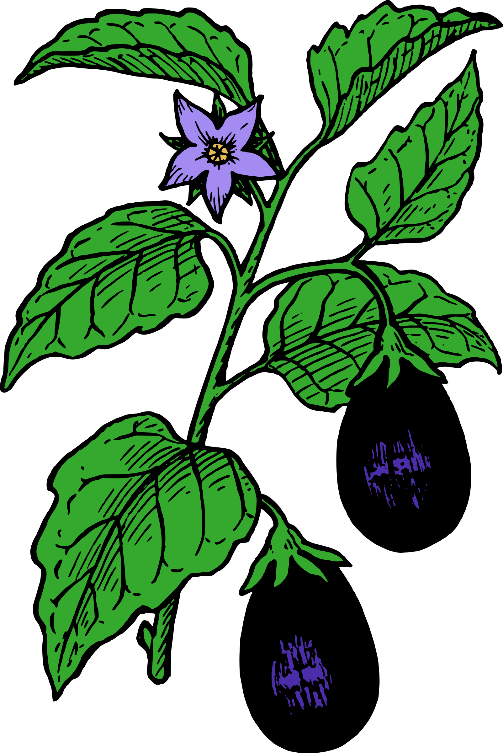 Eggplant clipart vector (33+) eggplant art microsoft Plant