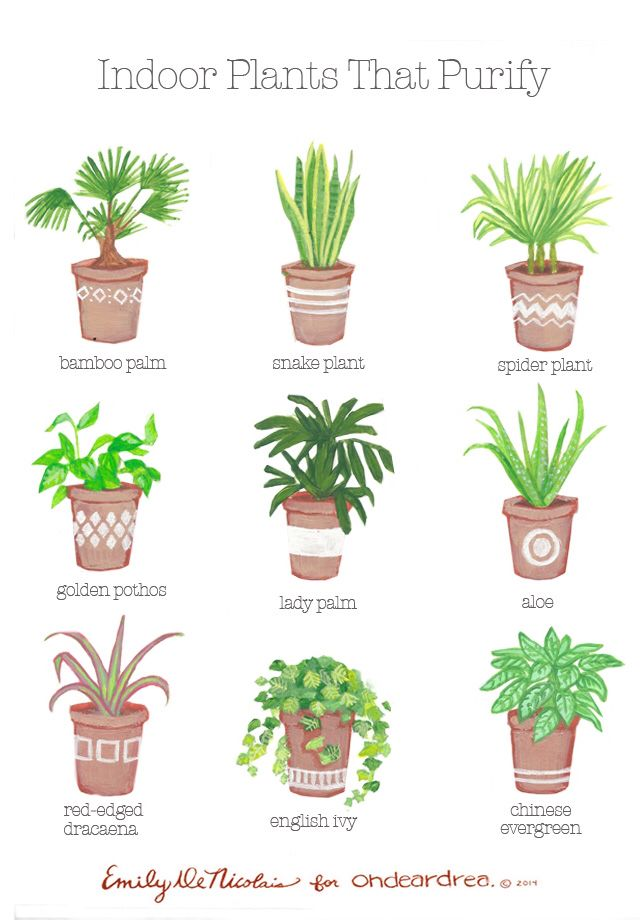 Plant clipart different kind plant Plants indoors! Best Indoor aloe