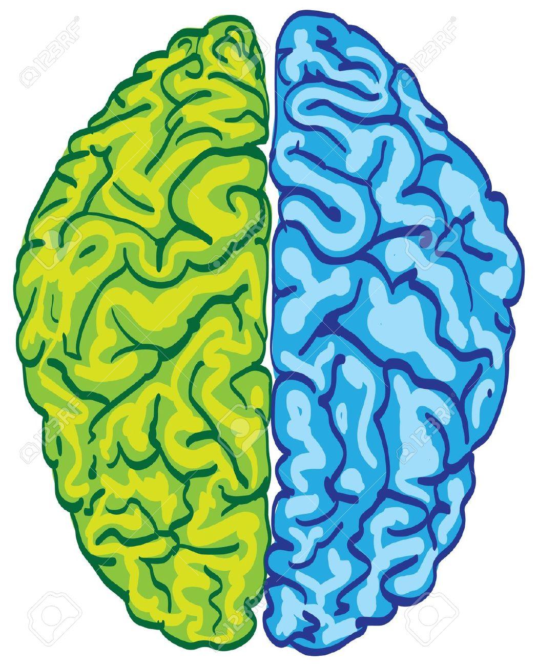 Color clipart brain Clipart com Brain 5 art