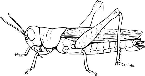 Color clipart insect Pages To coloring Coloring