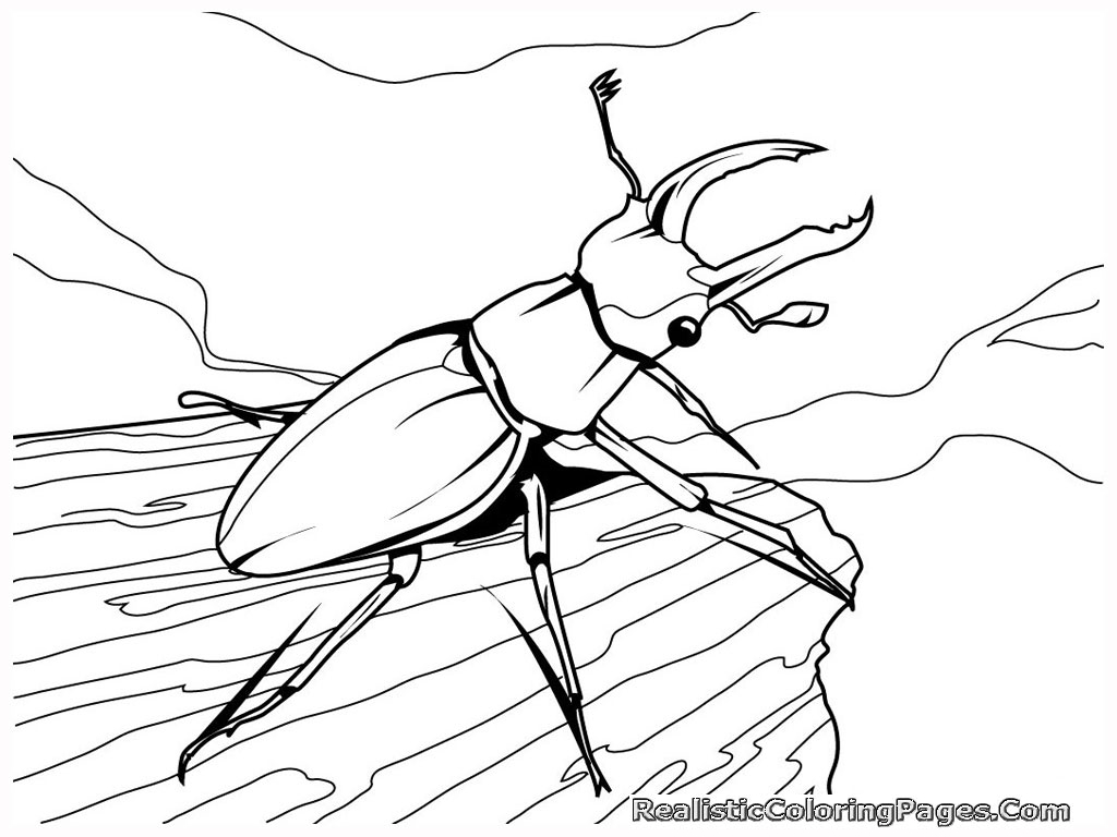 Color clipart insect Coloring Color for Pictures kids