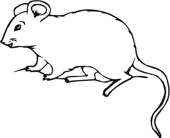 Drawn rat mol Rat Clipart Clipart 17 Free
