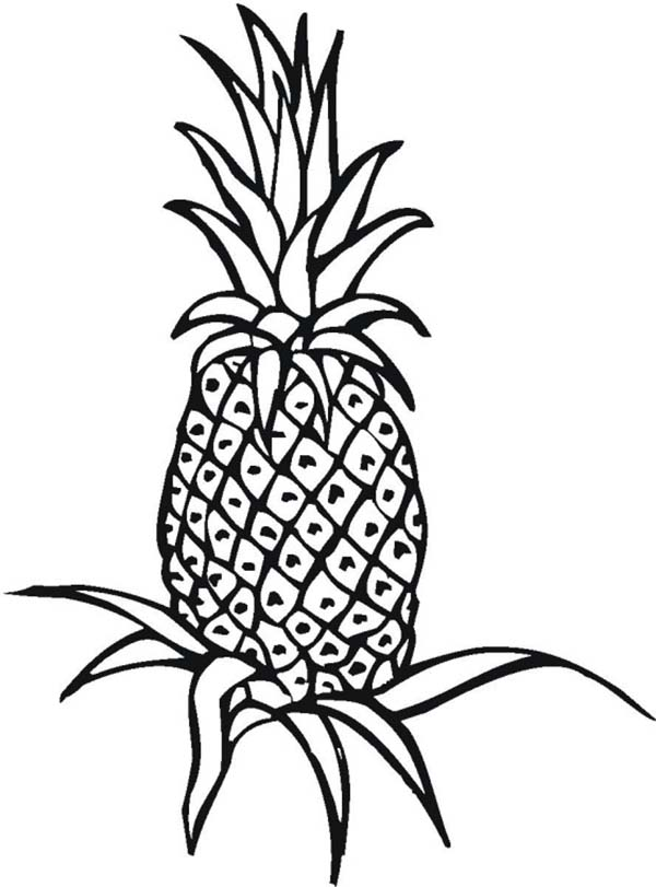 Color clipart pineapple Free Panda Clipart Images to