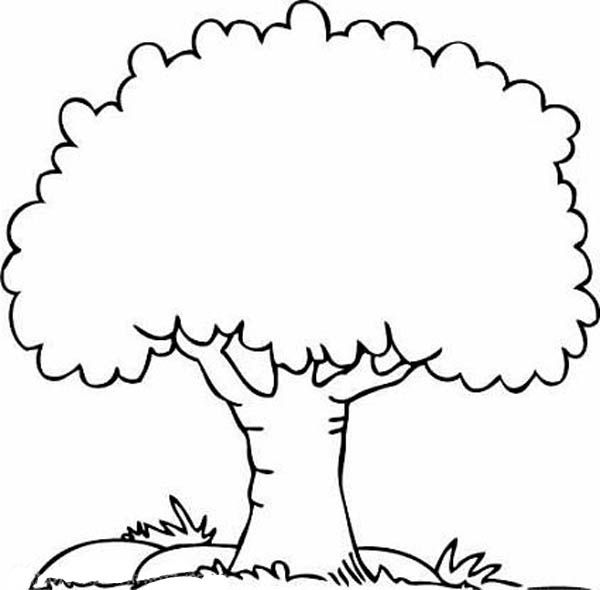 Plant clipart colouring Collection coloring Clipart Tree tree