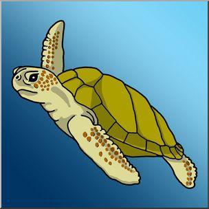 Sea Turtle clipart aquatic #3