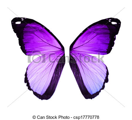 Colouful clipart butterfly wing #5