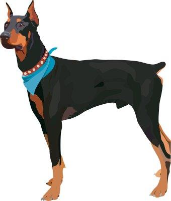Doberman Pinscher clipart Pinscher art art clip Dog