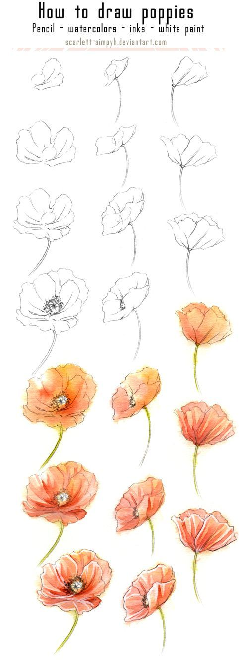 Drawn poppy flower leaf Colorful draw 20 25+ In