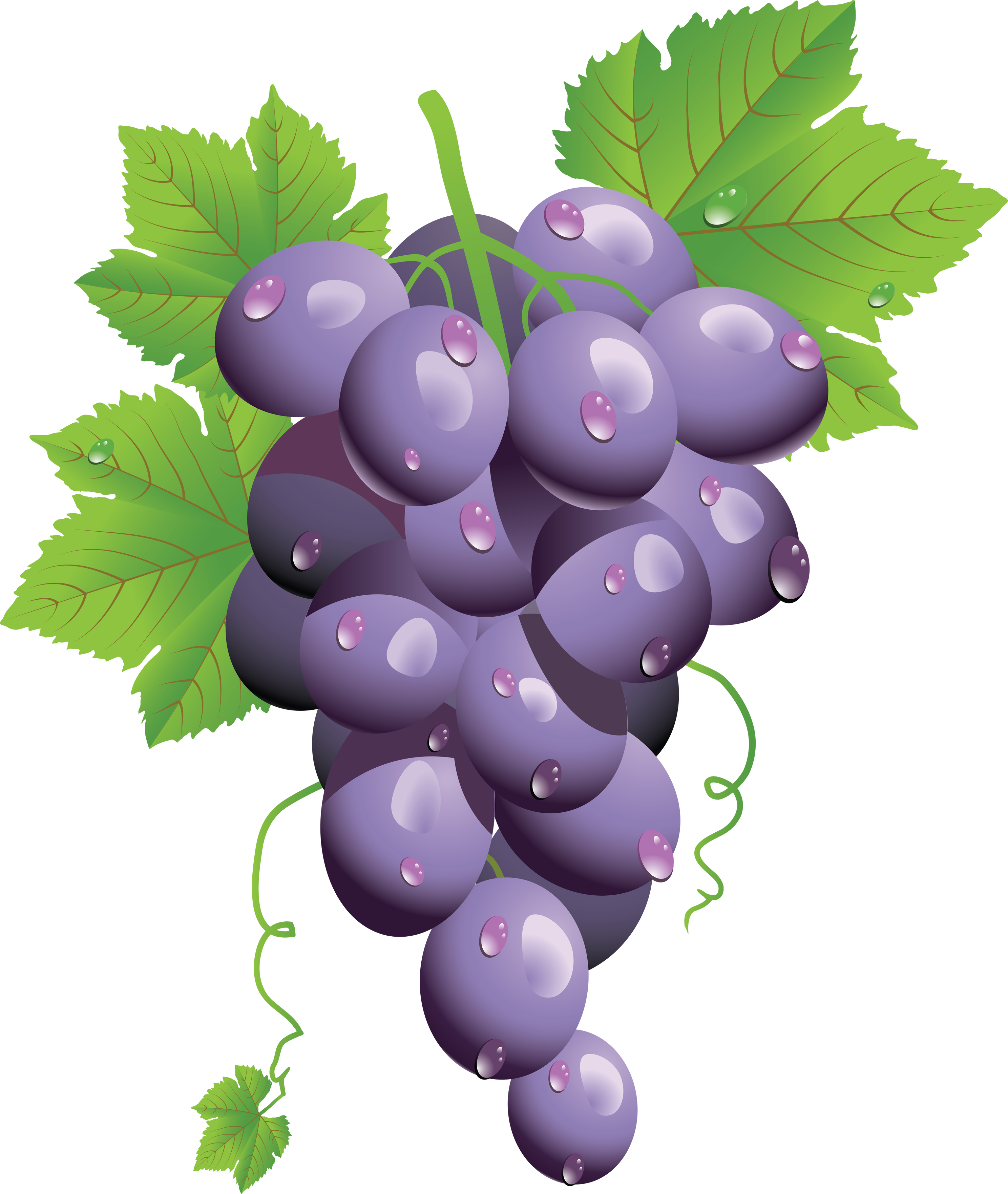 Berry clipart animated PNG PNG Grape Grape image