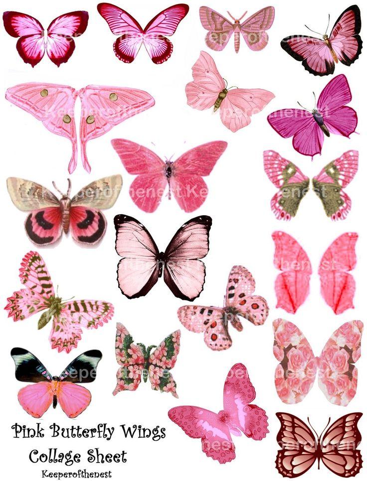 Pink Rose clipart pink black butterfly Mixed Pinterest butterfly ACE0 Art