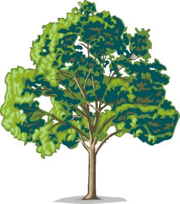 Tree clipart oak tree Clipart you Family Oak Cliparting