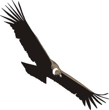 Condor clipart Of Birdwing andean Dragons BULM