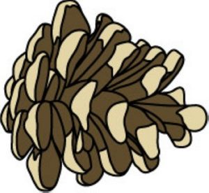 Pine Cone clipart simple Clipart Christmas Clipart Simple clipart